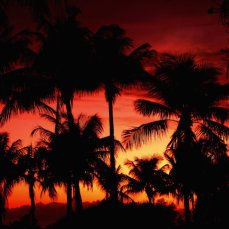 Sanibel Sunset 1